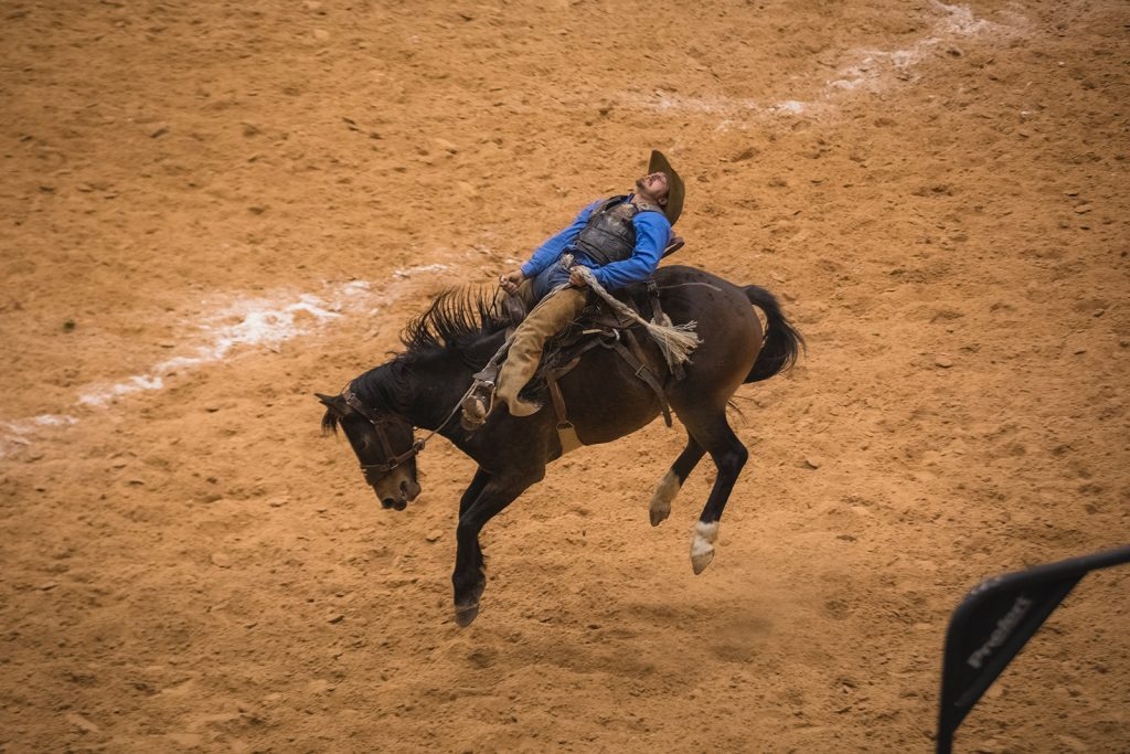 A cowboy being bucked by a horse at rodeo in Texas.