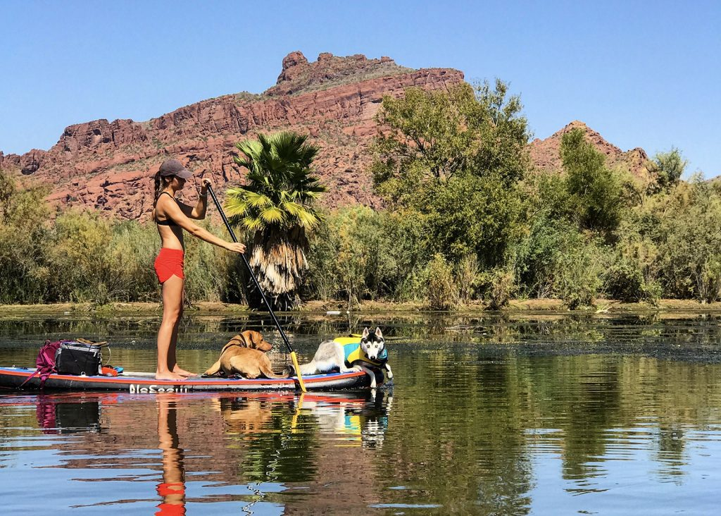 A woman and her dogs paddle boarding on the Salt River in Mesa.
