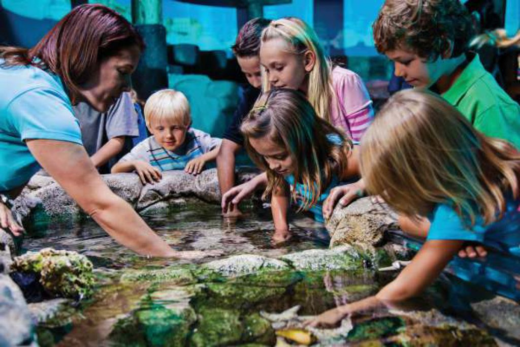 A group of children crowd around a pool of water, petting an animal