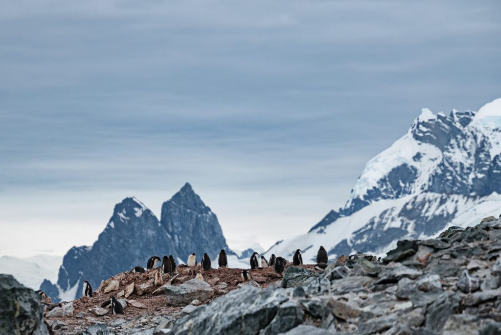 Penguins gather on a cliff