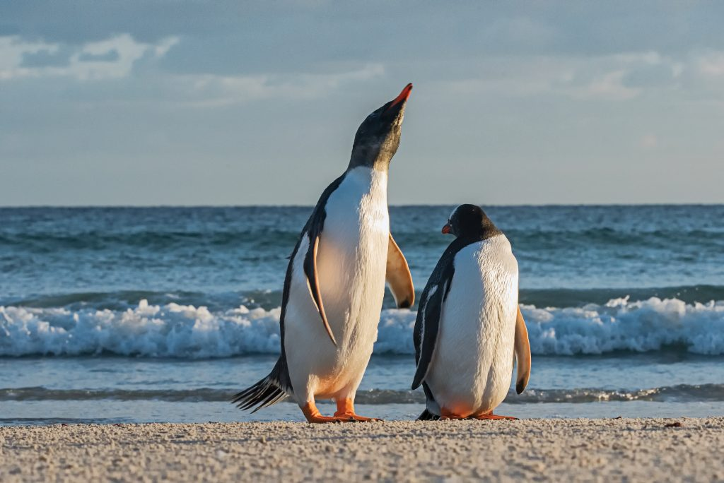 Two penguins stand on the shore.
