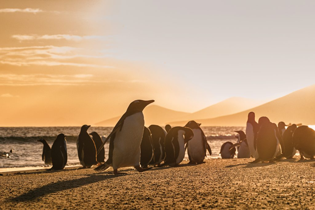 a group of penguins gather on a beach