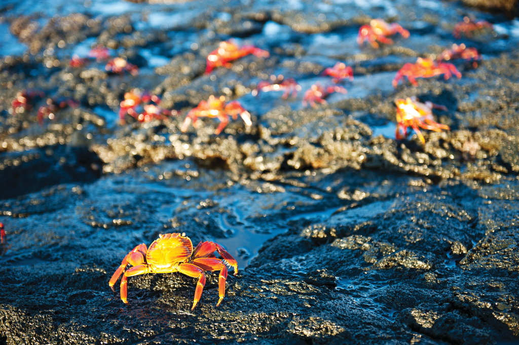 Crabs move over rockpools