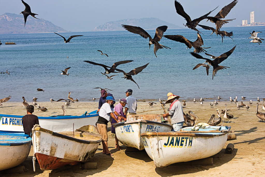 Birds circle overhead as fishermen clean fish on a beach in Mexico.