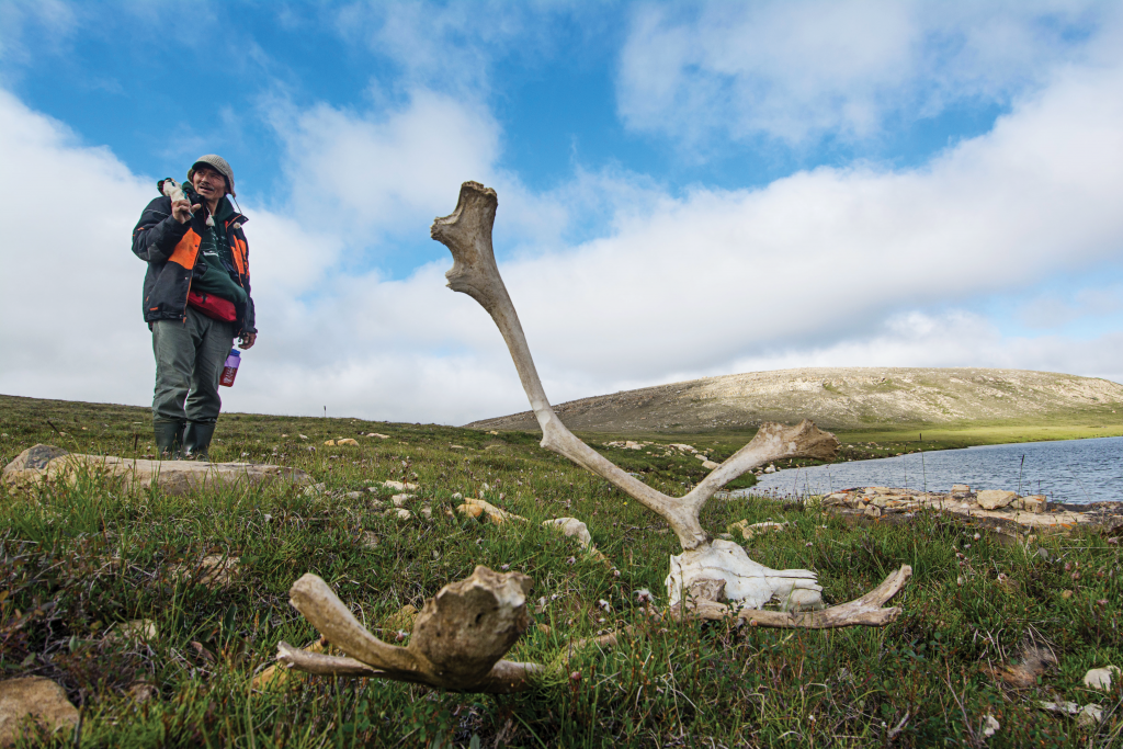 A man stands over a caribou skull on the tundra