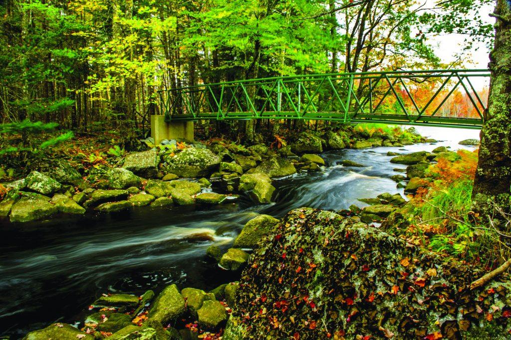 A stream runs under a green bridge in a forest