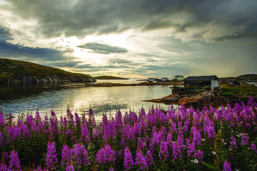 Purple flowers surround a bay at sunset