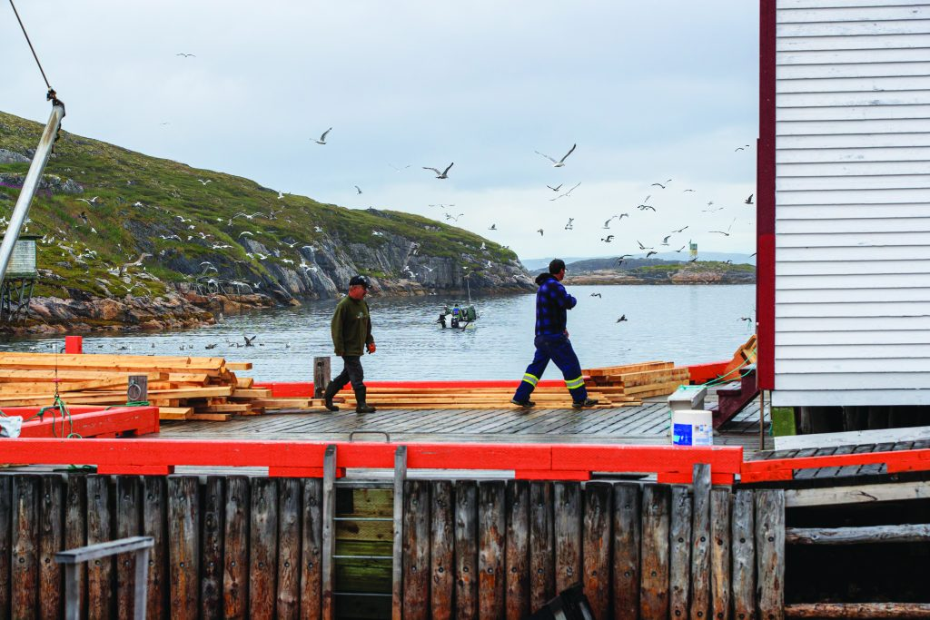 Two fishermen walk along a dock surrounded by wood and seagulls