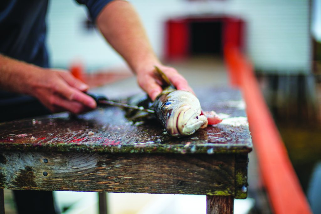 A man cuts open a cod on a wooden table