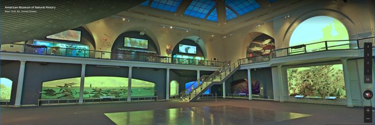 American Museum of Natural History virtual tour